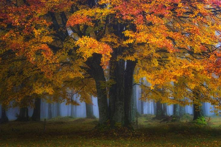 עץ עם עלים בצבעי הסתיו