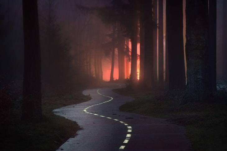 יערות בחשכת הלילה עם אורות מכונית