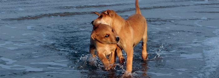 אופי של כלבים