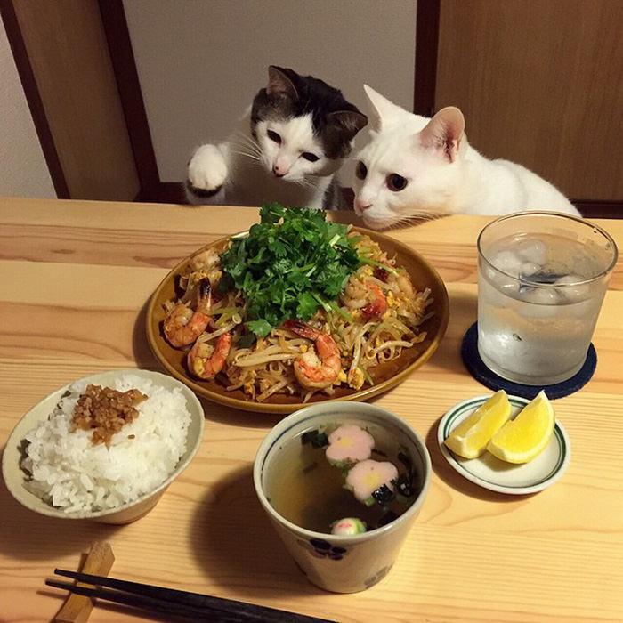חתולים שמנים