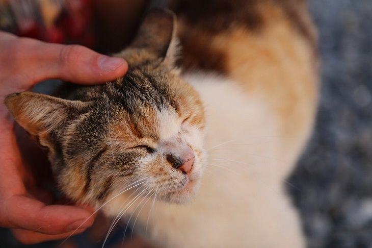 יתרונות בריאותיים של מגדלי חתולים: יד מלטפת ראש של חתול, שעוצם עיניים בעונג
