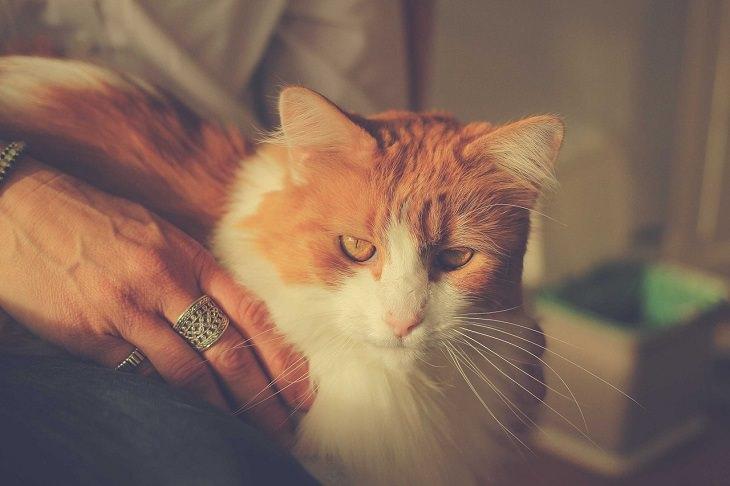 יתרונות בריאותיים של מגדלי חתולים: יד של אישה מלטפת חתול
