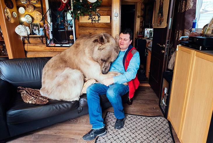 סטפן דוב המחמד