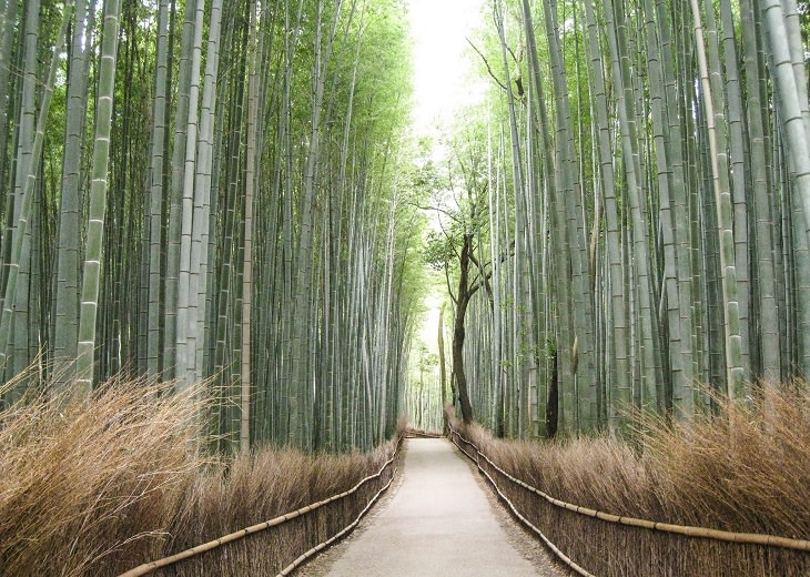 המקומות המדהימים ביותר ביפן