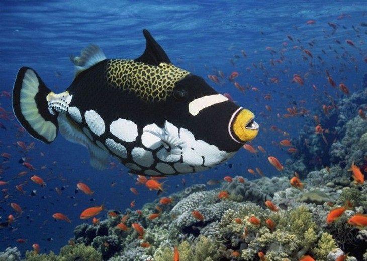 דגים יפים וצבעוניים