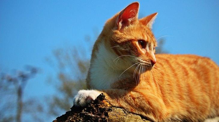 בדיחה על חתול ורגישות