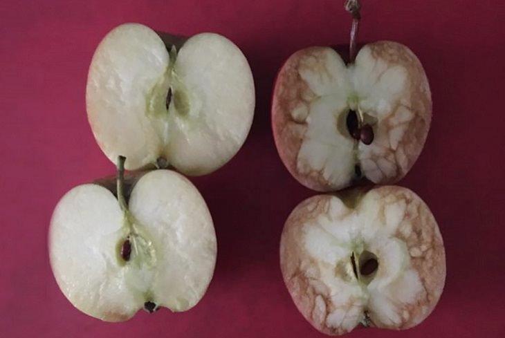 משל התפוח - דרך טובה להסביר על בריונות