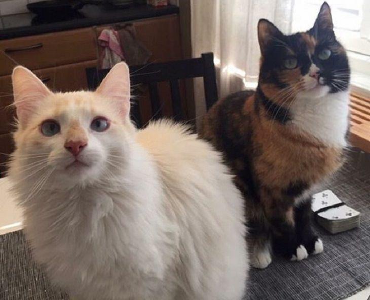 זוגות חתולים מצחיקים