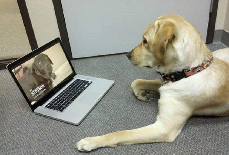 חיות וטכנולוגיה