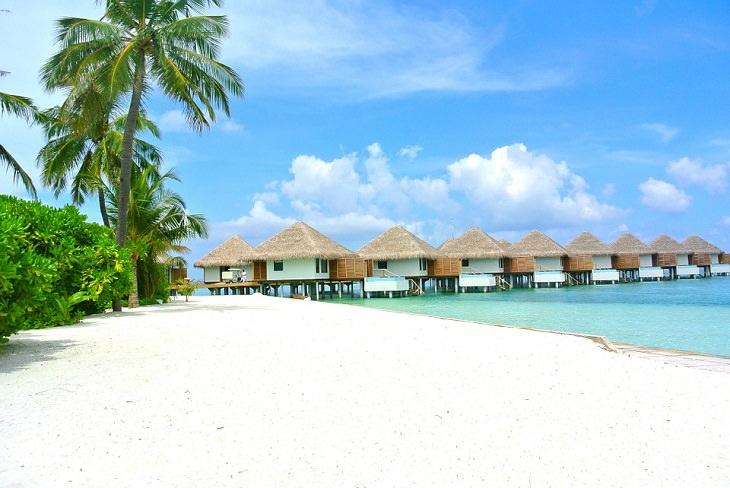 חוף טרופי עם עצי דקל ודק עץ שמוביל לבקתות עץ