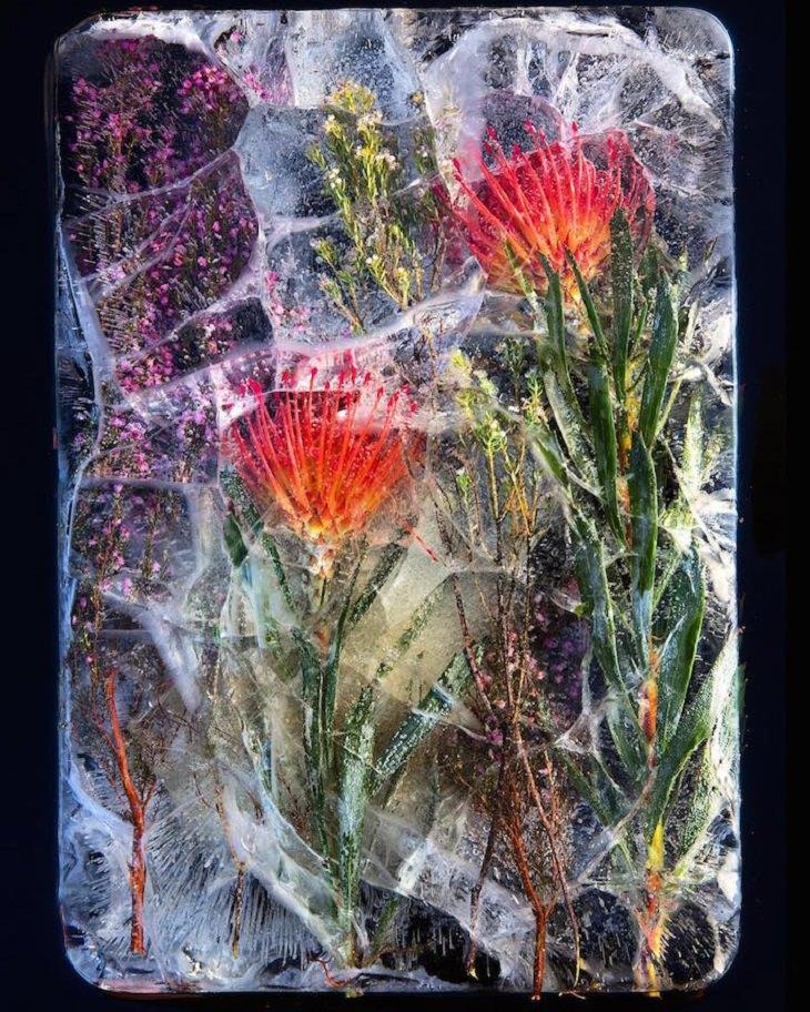 פרחים בצבע כתום וסגול בבלוק של קרח