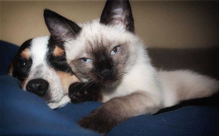 סימנים למחלה אצל חיות מחמד