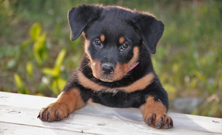 כלבים מבינים דיבור