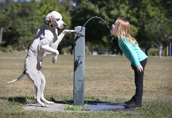 כלב מפעיל ברזית מים בשביל ילדה