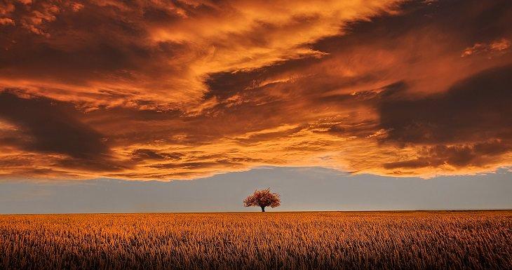 עץ בשדה תחת עננים אדומים