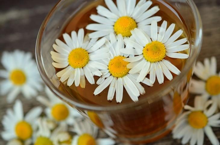 כוס תה עם פרחי קמומיל בתוכה