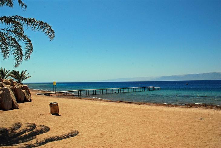 חוף ים בעקבה עם עץ דקל נוטה לצד