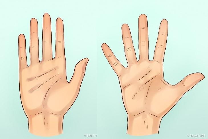 מה כפות הידיים שלנו אומרות עלינו