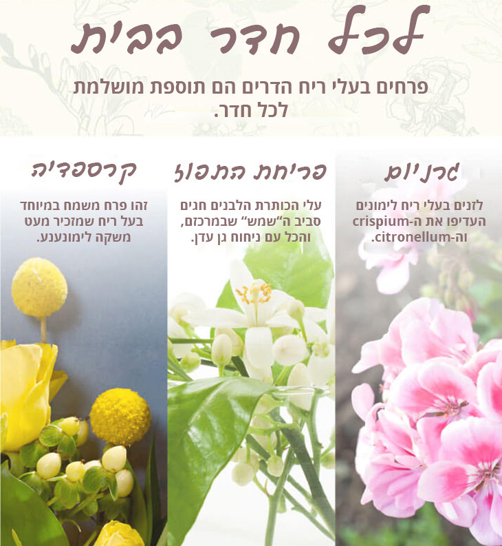 המדריך המלא להתאמת פרחים לחדרי הבית