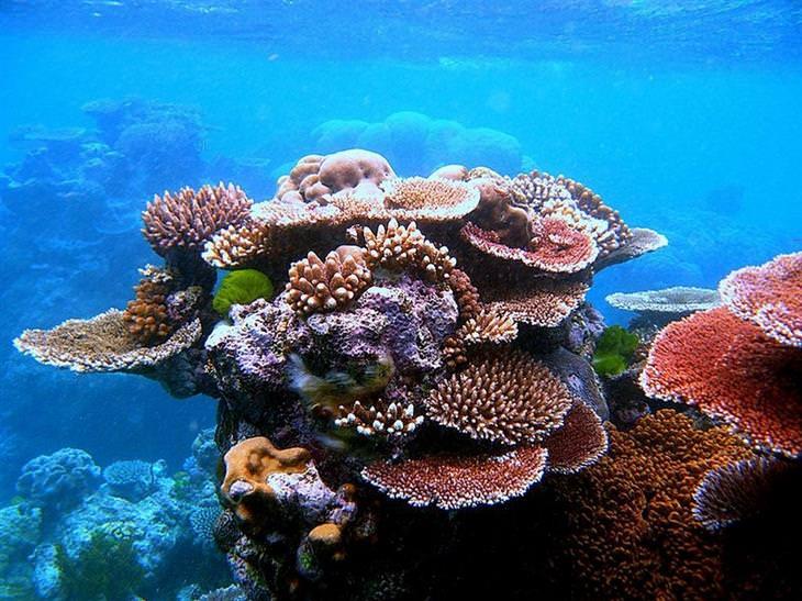 אלמוגים שונים וצבעוניים בתוך המים
