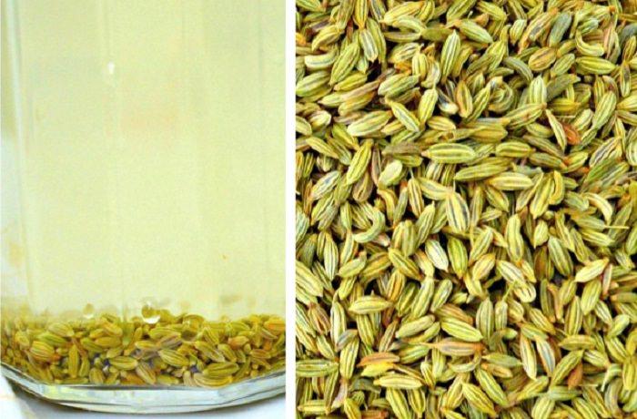 זרעי שומר בתפזורת ובצנצנת עם מים