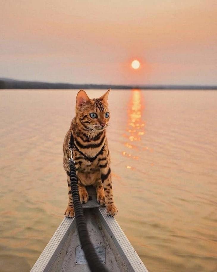 חתולה שטיילה בעולם: סוקי החתולה עומדת על סירה מול שקיעה בים