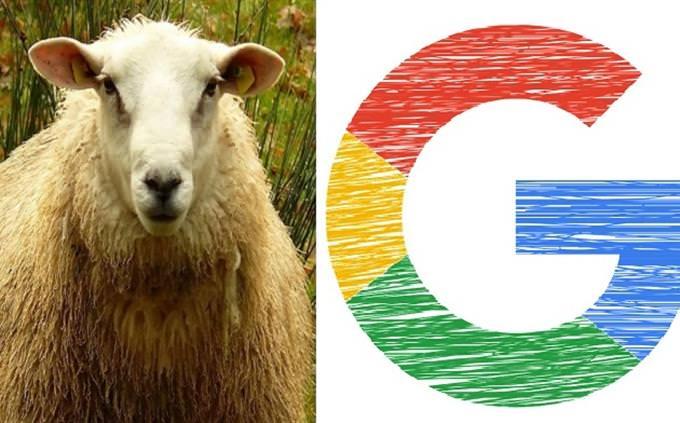 בחן את עצמך - מה קדם למה: אות של לוגו מנוע החיפוש גוגל ודולי הכבשה המשובטת