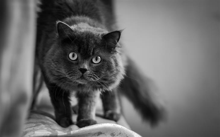 טעויות עם חיות המחמד: חתול