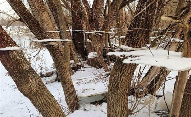 משטחי קרח שטוחים שתלויים באוויר בין גזעי עצים