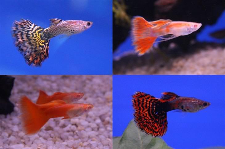 דגי גופי שונים