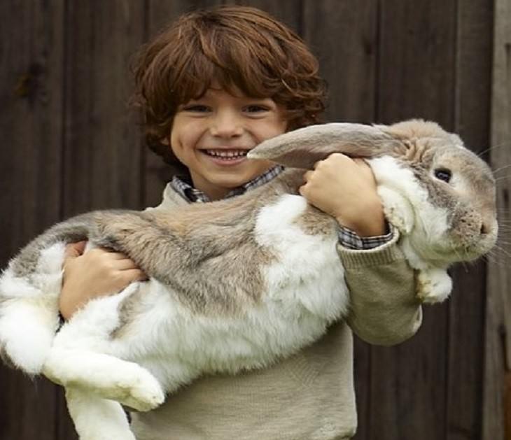 ילד מחבק ארנב גדול