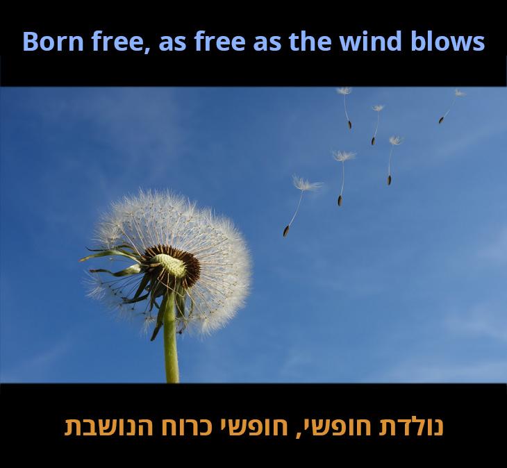 נולדת חופשי, חופשי כרוח הנושבת