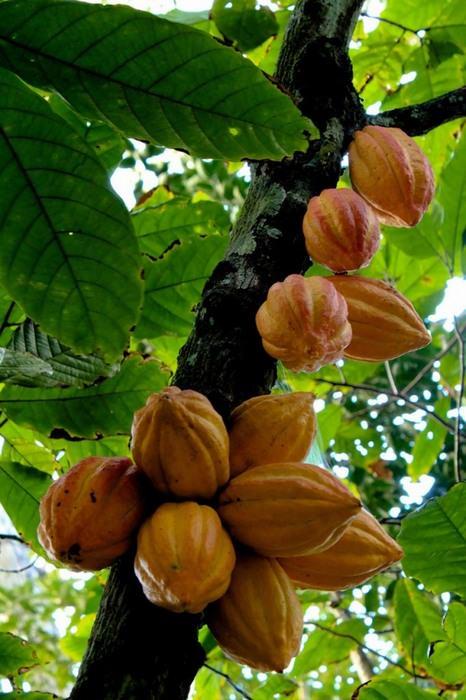 פירות וירקות בצורתם הטבעית בשדה