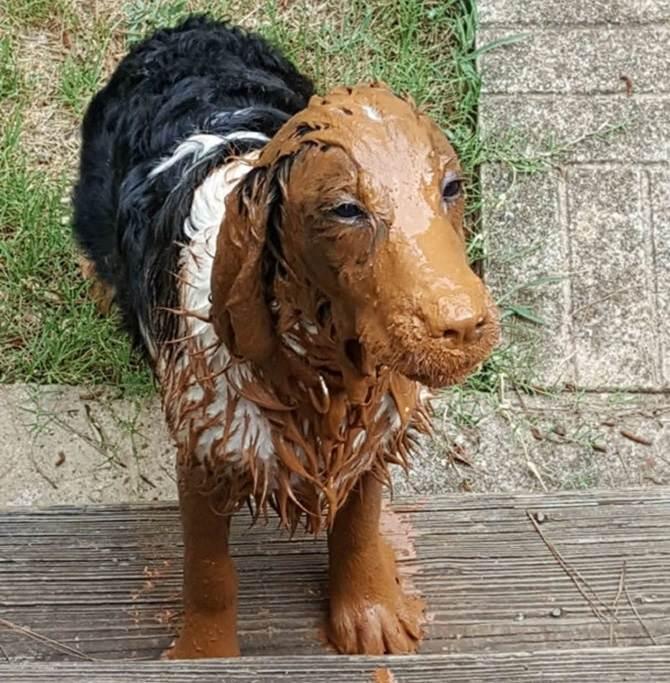 כלב מלוכלך בבוץ
