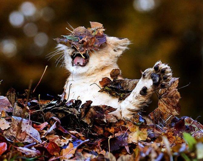 חתול בסבך עלים