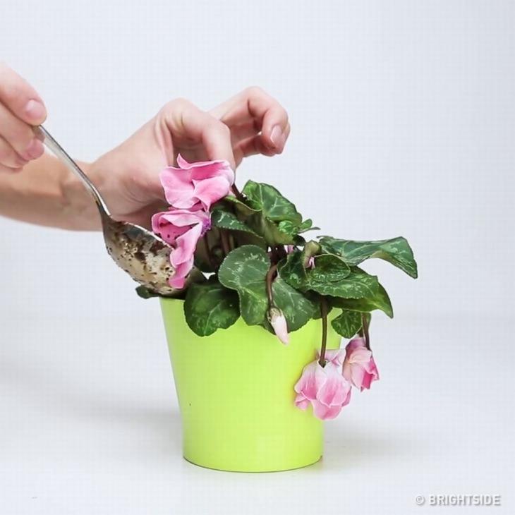 מריחת התערובת סביב הצמח