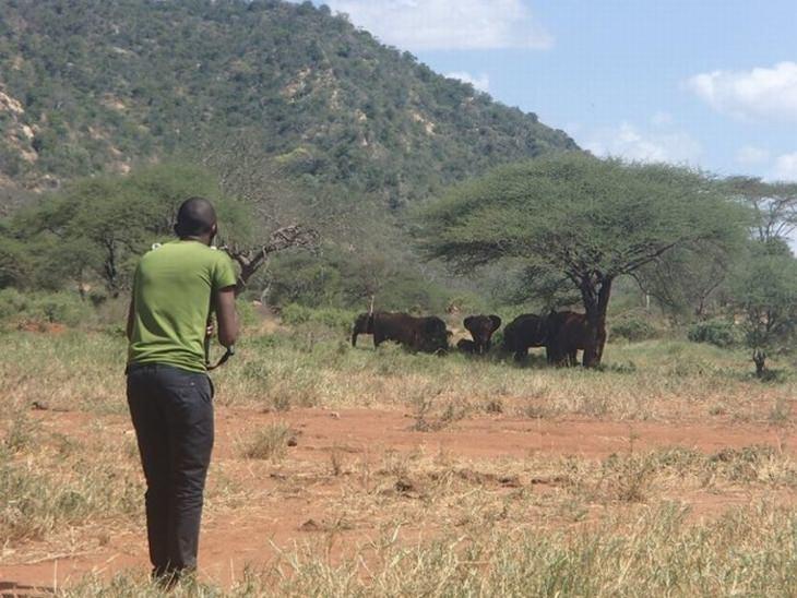 עדר פילים מול גבר בערבות קניה
