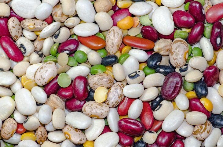 שעועית במגוון סוגים וצבעים