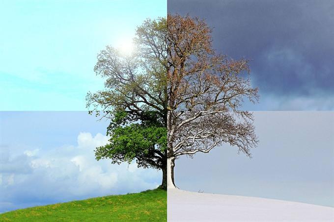 עץ בכל ארבעת העונות