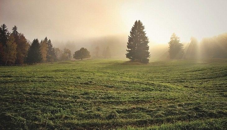 עצים ומרבד דשא וצמחיה ביער, על רקע אור הזריחה המנצנץ