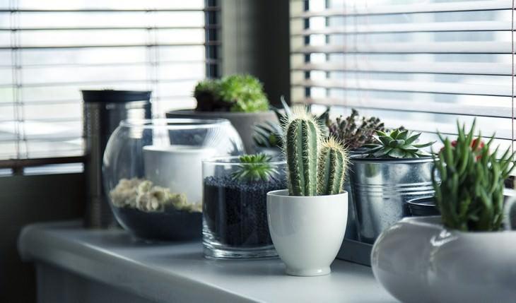 צמחים מסוגים שונים עומדים ליד אדן החלון