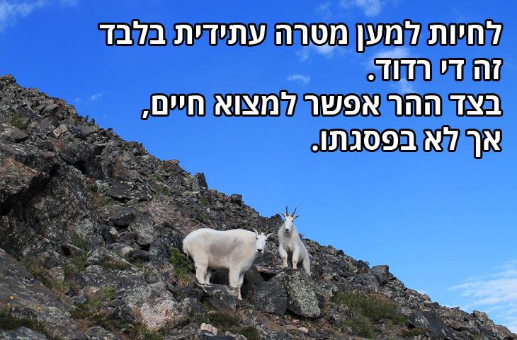 לחיות למען מטרה עתידית בלבד זה די רדוד. בצד ההר אפשר למצוא חיים, אך לא בפסגתו.