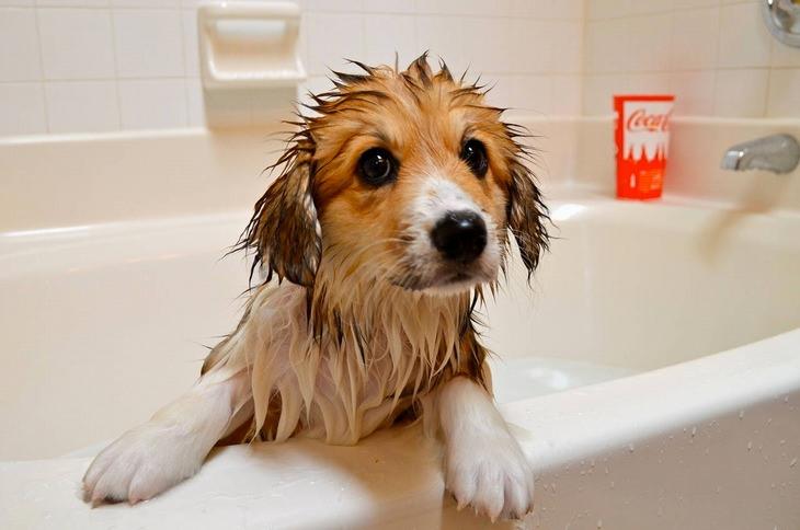 כלב נשען על שולי האמבטיה