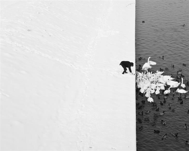 אדם מאכיל ברבורים בשלג