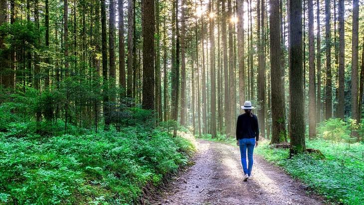 אישה פוסעת ביער