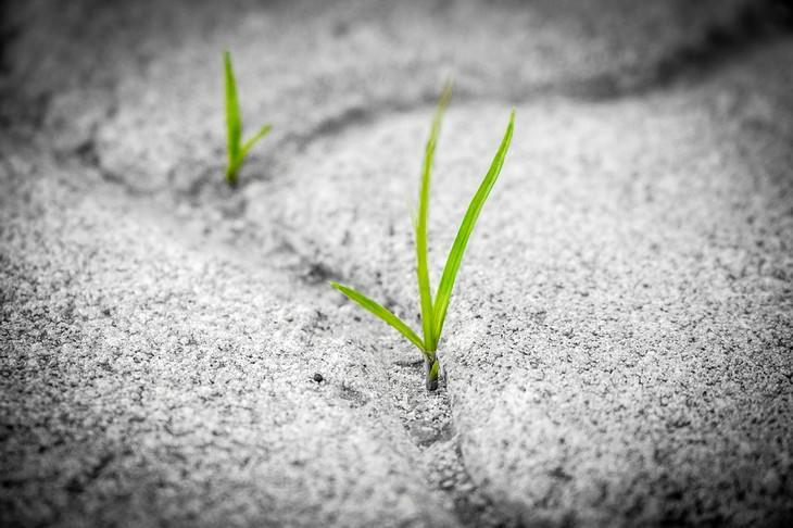 עלים צומחים דרך בטון