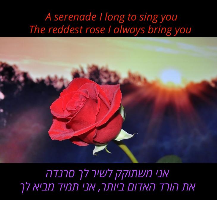 אני משתוקק לשיר לך סרנדה את הורד האדום ביותר, אני תמיד מביא לך