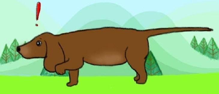 כלב עם זנב מתוח לאחור