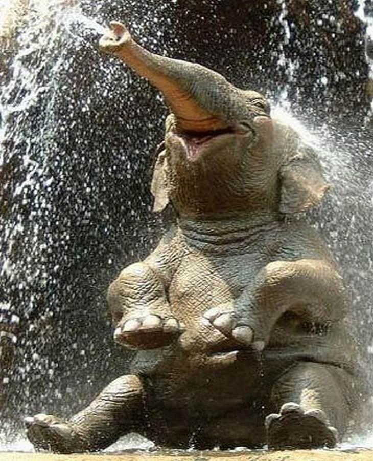 פיל יושב שנהנה משפריץ מים
