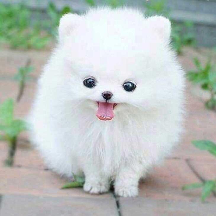 כלב מחייך